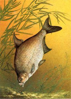 Fish, Pets, Animals, Animals And Pets, Animales, Animaux, Animal, Animais, Ichthys