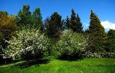 Huch, heute soll bei uns im Saarland doch tatsächlich mal die Sonne zu sehen sein. ... Und der Regen eine kurzfristige Pause machen. Das freut dann sicher nicht nur die Apfelbäume im Garten. :-)