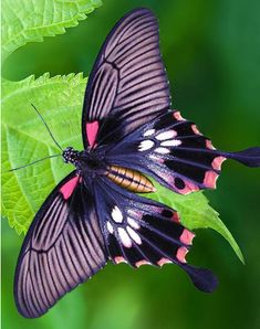 The Effective Pictures We Offer You About Arthropods insects A quality picture can tell you many thi Butterfly Photos, Butterfly Wallpaper, Butterfly Flowers, Butterfly Images Photography, Cool Insects, Bugs And Insects, Beautiful Creatures, Animals Beautiful, Cute Animals
