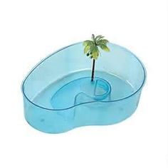 Used to go to Woolworths and Woolco and buy baby turtles in these bowls