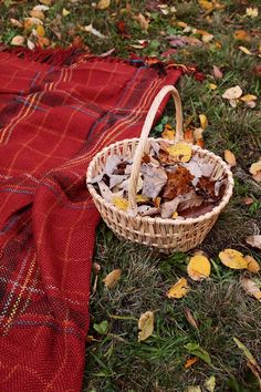 This picture truly captures the quintessence of Fall...