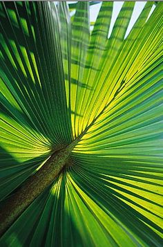 20 New Ideas For Plants Green Leaves Palm Trees Fruit Trees, Palm Trees, Green Leaves, Plant Leaves, Airlie Beach, Palmiers, Green Life, Tropical Paradise, Tropical Plants