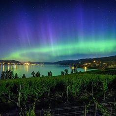 A stunning Northern Lights display over the vineyards of the Naramata Bench.  (photo: @preservedlight via Instagram) Preserved Light Photography by Caillum Smith #explorebc #explorecanada — paikassa Naramata Bench. https://www.facebook.com/HelloBC/photos/a.10150205596167683.316410.67430677682/10153003316372683/?type=1 https://www.facebook.com/ginger.lee.5243