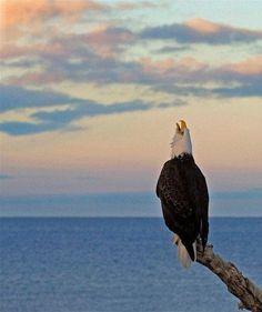 Beautiful eagle:)