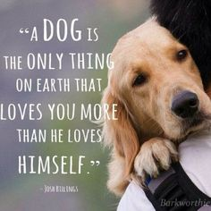 Ancient Indian legend prooves that dogs were sentet on Earth to teach people what true love is.Personally , I do see it - in the best of teaching,parenting, friendship and uter devotion to some exiting subject. How NOT to be gratefull and returne to them all the best we can