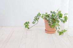Deze 6 planten doen wonderen voor je nachtrust