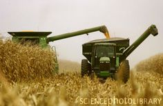 Harvest...I spent many a summer on a combine with Uncle Albert...great memories :)