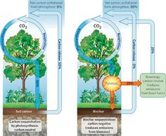 Pyrolysis for production of biochar is carbon negative and gasification is carbon natural