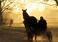 Early Morning Jog: Tie for Second Place - Professional Photo by John Sannucci