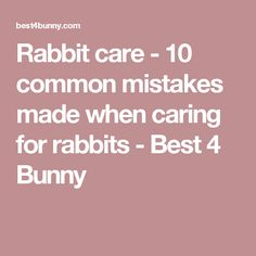 Rabbit care - 10 common mistakes made when caring for rabbits - Best 4 Bunny