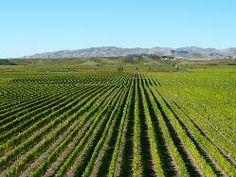 #Blenheim #NewZealand this is where we are retiring #vines #wine #sunshine !!