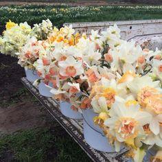 Virágárus | Fotó: instagram.com/floretflower via boredpanda.com