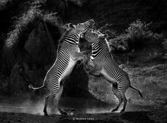 http://enpundit.s3.amazonaws.com/wp-content/uploads/2012/07/marina_cano_animal_love16.jpg