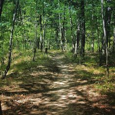 <b>River Bends Mountain Bike Trail</b><br> Shelby Township<br>  This trail that's a part of Holland Ponds Park's Great Blue Heron Rookery takes you through 4.3 miles of pure nature. You can adventurously bike or hike your way through these winding woods. <br> <i>Photo via IG user @sloane1014</i>