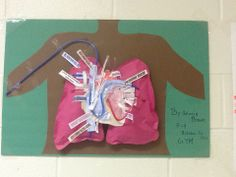 Heart Function Posters! #DISDHPE #DallasISD #MyFavorite