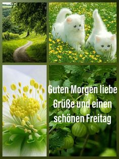 Erika, Cats, Good Morning Friday, Morning Sayings, Good Morning Images, Friday Weekend, Sunday, Tuesday Pictures, Gatos