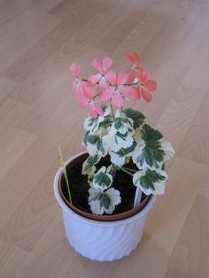 Frank Headley Plants, Plant, Planets