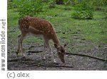 gaggenau-karlsruhe-südtangente: Tierpark Oberwald bei Karlsruhe