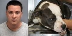 Demand Maximum Penalty for Man who Burns Dog Alive after Adopting from Craigslist
