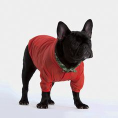 Weather Jacket (Red) for dogs