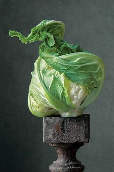This stunning collection of vegetable portraits from fine art photographer Lynn Karlin will remind you to love and honor your garden harvest. Still Life Photos, Still Life Art, Fruit And Veg, Fruits And Veggies, Still Life Photography, Fine Art Photography, Product Photography, Vegetables Photography, Grilled Veggies