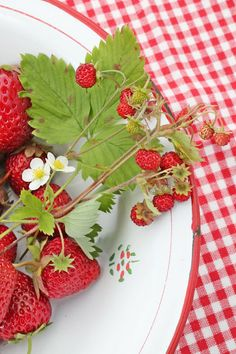 sweet strawberries and gingham, Oh for a taste of summer!