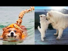 AWW CUTE BABY ANIMALS Videos Compilation cutest moment of the animals 2020 - Soo Cute! #58 - YouTube Cute Baby Animals, Funny Animals, Baby Animal Videos, Reptiles, Funny Cats, Cute Babies, Insects, Haha, Corgi