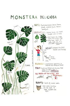 Indoor Vertical Gardening Tips and Ideas Organic gardening isn't always about food to eat. Some people enjoy growing flowers and other forms of plant life as well. You can grow anything bereft of harmful chemicals as long as you're d Indoor Garden, Garden Plants, Indoor Plants, Monstera Deliciosa, House Plants Decor, Plant Decor, Flora, Cool Plants, Trees To Plant