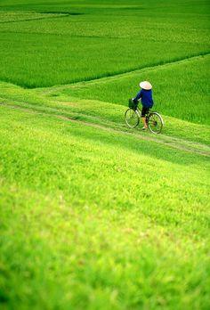 Thăm ruộng #scene #vietnam #bicycling