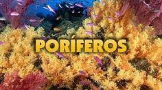 poriferos - YouTube