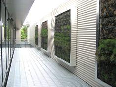 Vertical gardens on roof terrace