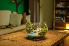 Terariu plante, decoratiune plante naturale Terrarium, Home Decor, Terrariums, Decoration Home, Room Decor, Home Interior Design, Home Decoration, Interior Design