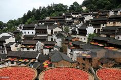 Chillies and other harvests dry in the sun during China's First Cultural Festival for Autumn Harvests on June Sixth according to Chinese canlendar at Huangling Village of Wuyuan County on July 21, 2015 in Shangrao, Jiangxi Province of China. First Chinese Cultural Festival for Autumn Harvests opened on the sixth day of June in Chinese canlendar, aiming to intergrate traditional Chinese culture with eco-travel and arose nationals' passion on folk culture. It's said that the festival will be…