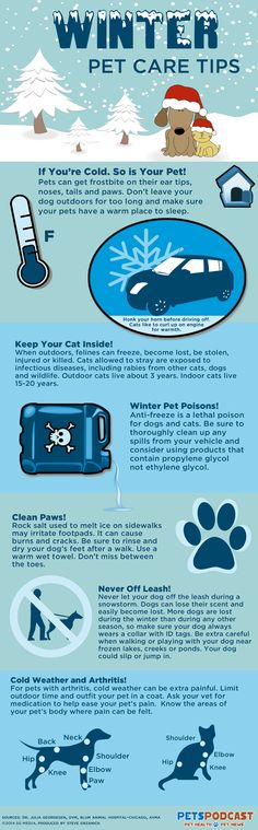 Winter Safety Tips for Pets(Vet Tech Kids)