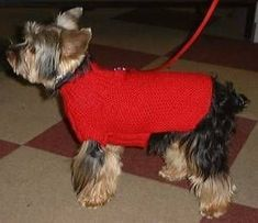 Discover recipes, home ideas, style inspiration and other ideas to try. Dog Sweater Pattern, Crochet Dog Sweater, Celine, Chiwawa, Dog Sweaters, Pullover, Dog Bandana, Pet Accessories, Dog Pictures