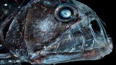 深海生物 35