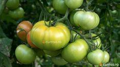 Cactus, Vegetables, Natural, Plant, Vegetable Recipes, Nature, Veggies, Au Natural
