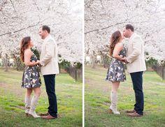 harford county wedding photographer, harford county engagement photo, outdoor spring engagement photo with cherry blossoms, engagement photo with dogs, sunset engagement photo
