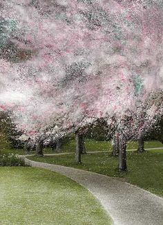 Caution - Spring has sprung early - © Patricia Pinsk, illustration Cherry blossom trees