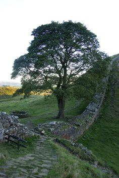 wanderthewood: Sycamore Gap - Hadrian's Wall, Northumberland, England by ozchris2