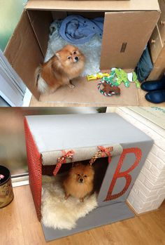 Made my dog his own house out of a card board box! DIY!