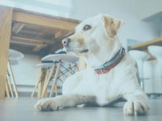 ¿Conoces el aceite de árbol del té? En este post te contamos sus propiedades como tratamiento antiparasitario para perros y cómo utilizarlo.