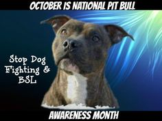 Stop BSL....Stop the fighting!