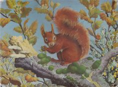 C F Tunnicliffe - Red Squirrel