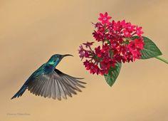 """Palestine Sunbird"""