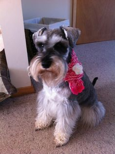 Esme wearing her new scarf!