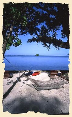Dolphin Bay Resort and Peleliu divers in Palau.