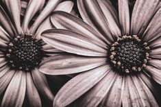 Mulberry Wine, Photo Black, Flower Power, Wild Flowers, Iphone Wallpaper, Beautiful Pictures, The Originals, Plants, Photography