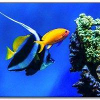 Aquariums in sacramento california
