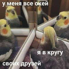 Stupid Memes, Funny Memes, Reaction Pictures, Funny Pictures, Hello Memes, Happy Memes, Russian Memes, Cute Love Memes, Wholesome Memes